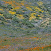 March 2017 at California Poppy Reserve in Lancaster, California.