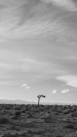Joshua Tree black and white iPhone and smartphone wallpaper.