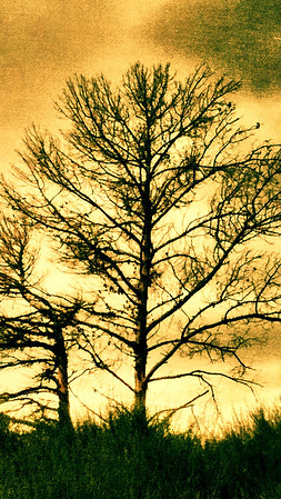 Barren tree iPhone and smartphone wallpaper.