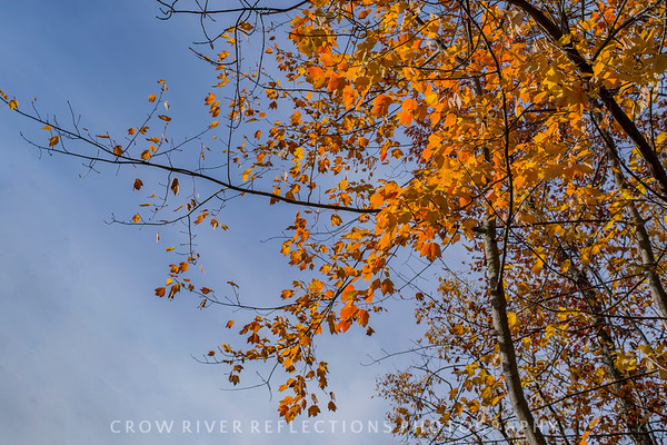 CRR-10-15-2017 CROW WING