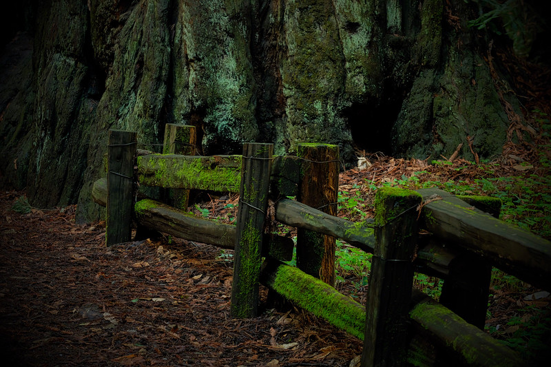 Mossy Lines