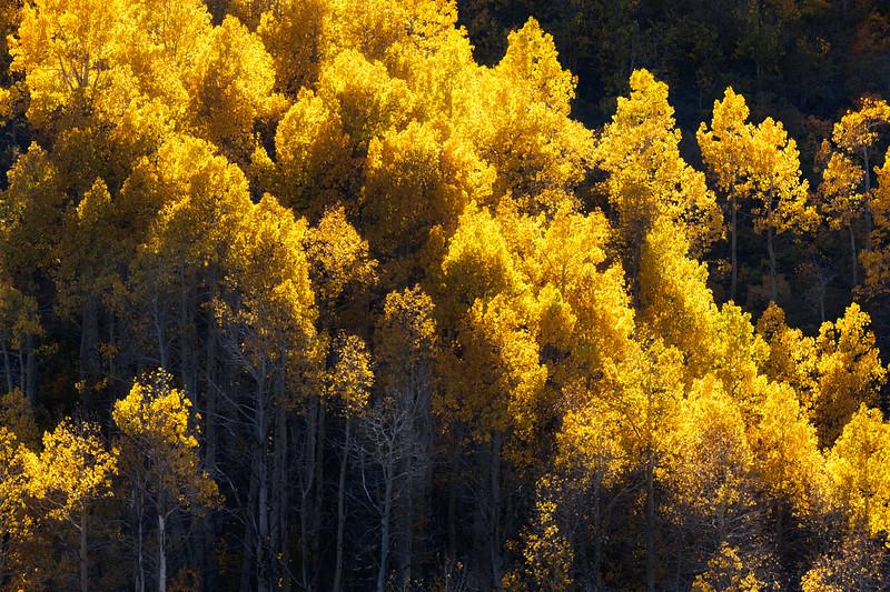 A Choir Of Gold