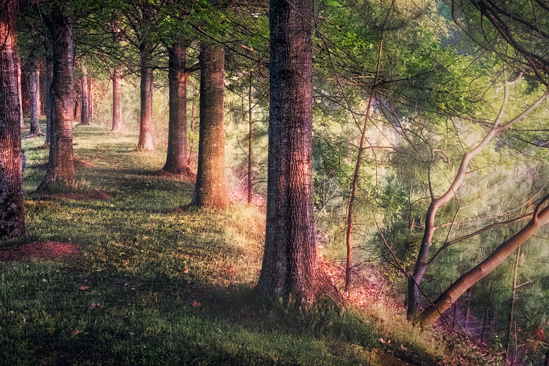 The Sweetness of Trees