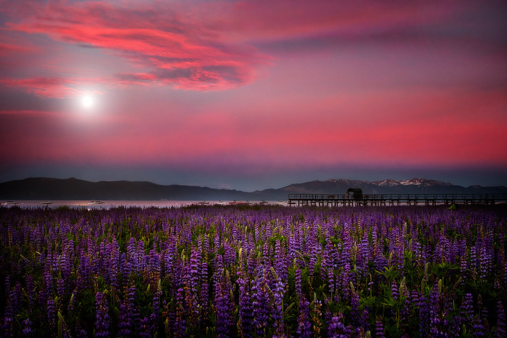 Moon Over Lupine