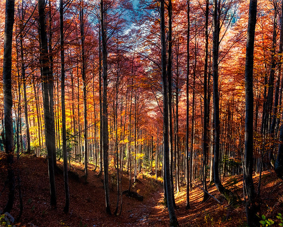 Red Forest Glow