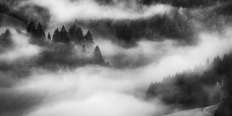 Mist In The Forest - monochrome