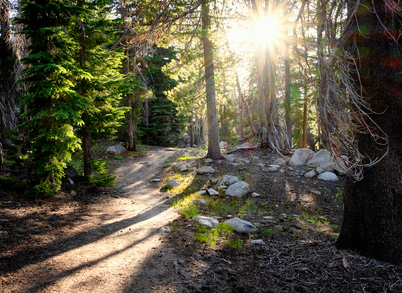 Through a Mountain Forest