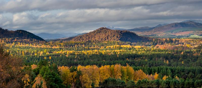 Caledonian Woodland