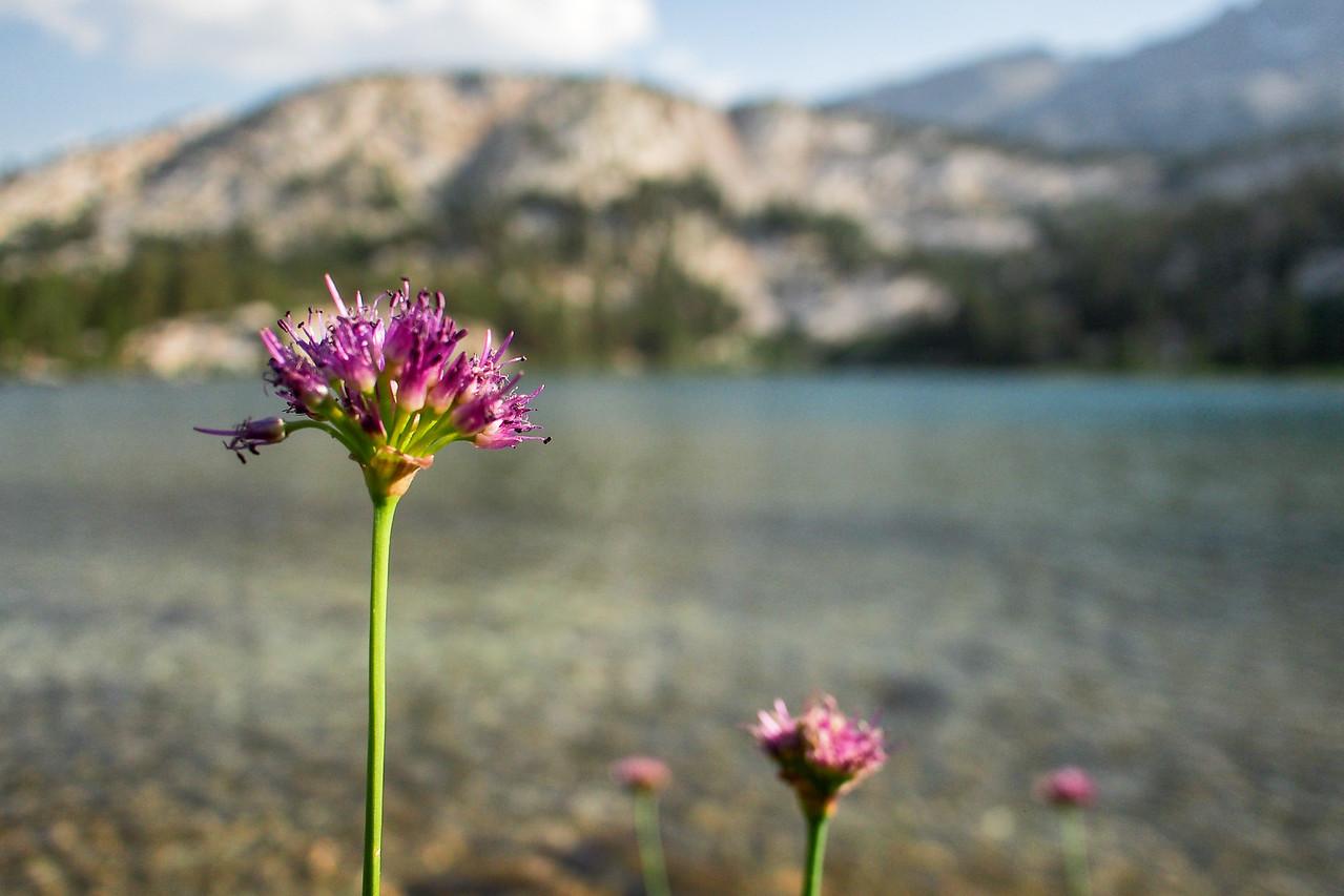 Wildflowers, Honeymoon Lake