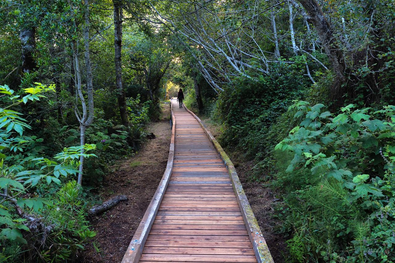 Boarwalk around Cleon Lake, MacKerricher State Park, CA