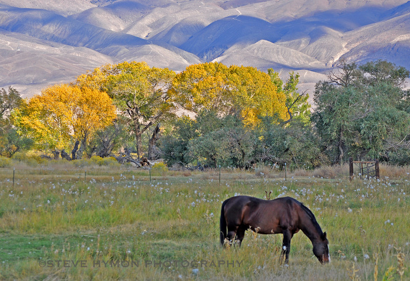 Horse pasture along U.S. 395 near Bishop, California, with the White Mountains in the background.