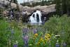 Wildflowers and Glen Aulin Falls, Yosemite
