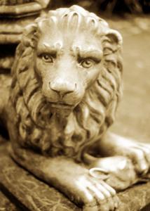Lion Head