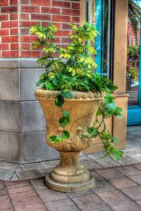 Ivy Pot