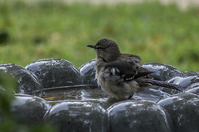 Brown Bird Bath