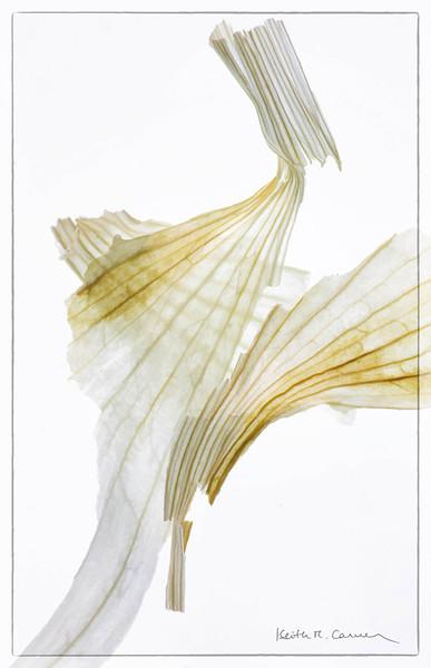 Garlic skins