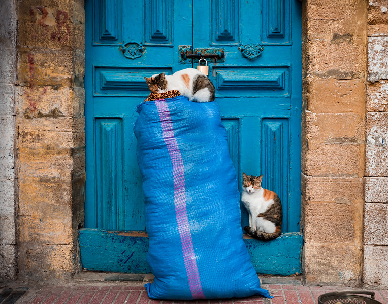 Door cats Morocco