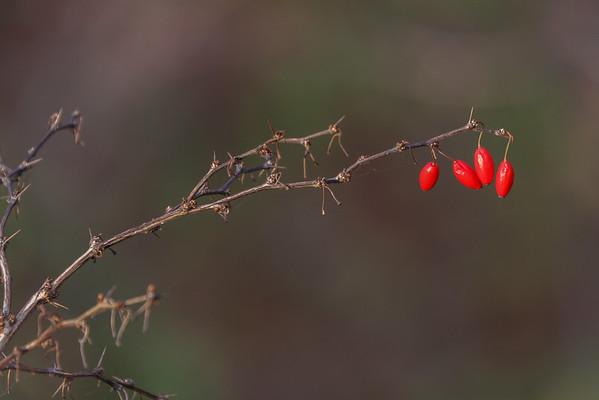 Remaining Berries