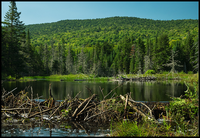 Fishing Brook