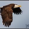 eagle027b