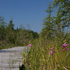Paul Smiths Boreal Life Trail, grass pink
