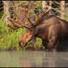 moose-072111-155
