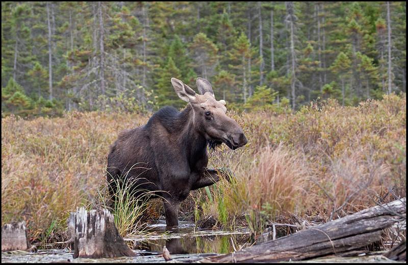 moose-060922-9409