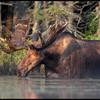 moose-072111-160