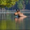 moose-9742