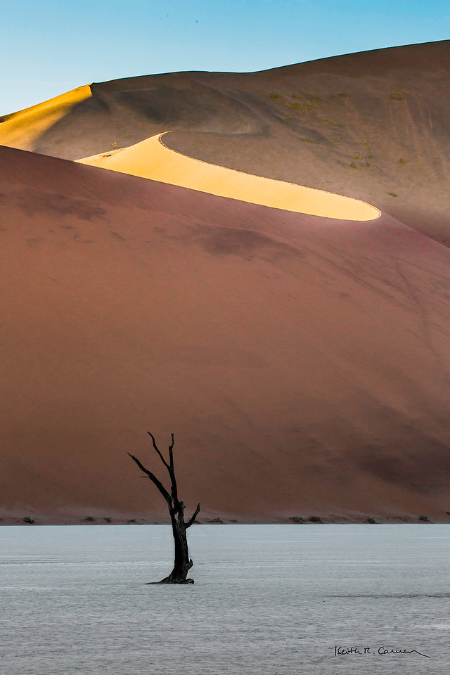A lone camel-thorn tree at Deadvlei, with Big Daddy sand dune in background