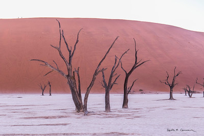 Ancient trees at Deadvlei before the sun eclipses the dune