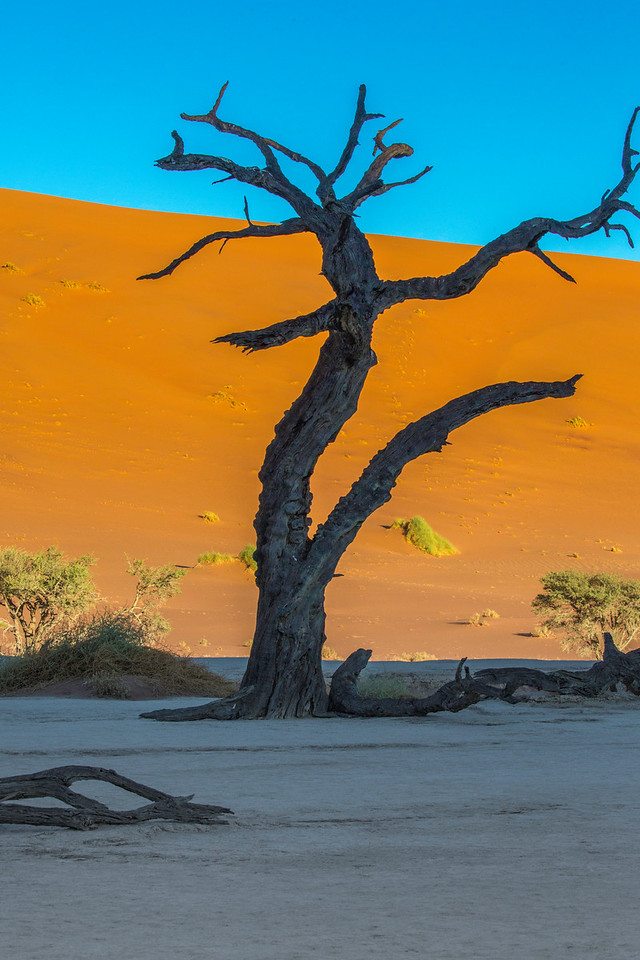 An ancient sun-tortured tree at Deadvlei