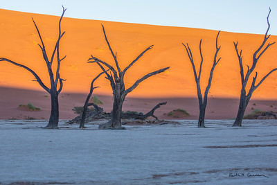 Ancient camel-thorn trees at Deadvlei