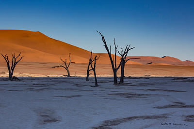 Skeletal trees at Deadvlei, with Big Daddy dune in background