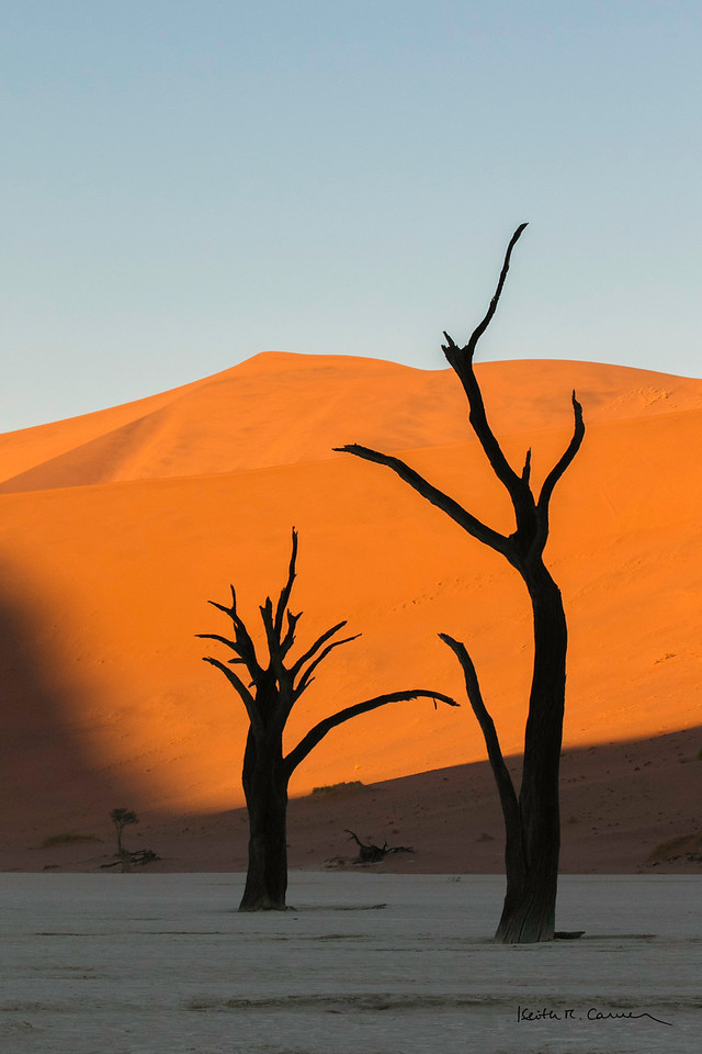 Bones and branches lift to the Namibian sky at Deadvlei
