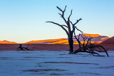 An ancient long-dead sun-blacked camel thorn tree at Deadvlei