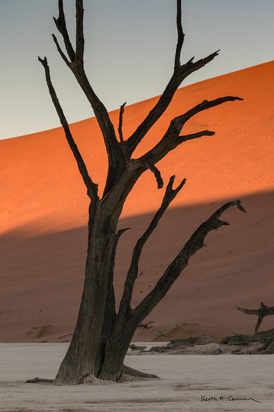 A very old camel thorn tree at Deadvlei