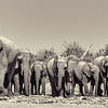 Led by an old matriarch, a large family of elephants departs an Etosha waterhole