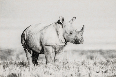 White rhino, Etosha National Park