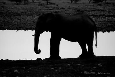 Elephant silhouette at an Etosha waterhole