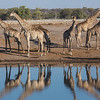 Six giraffes in horizontal asymmetry