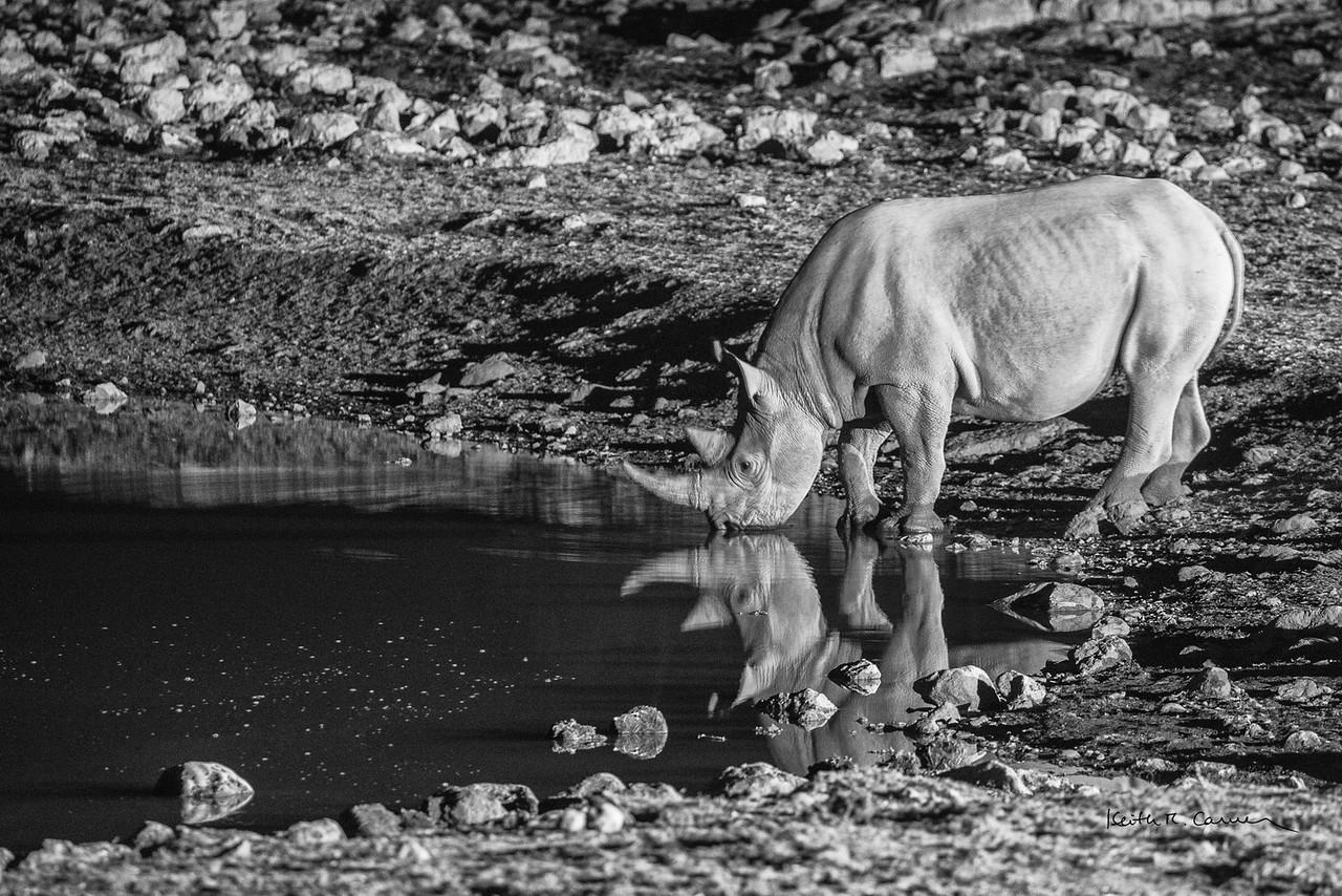 Black rhino  at waterhole at night, Etosha