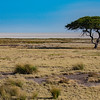 Lone acacia tree and Etosha pan, at Salvadora
