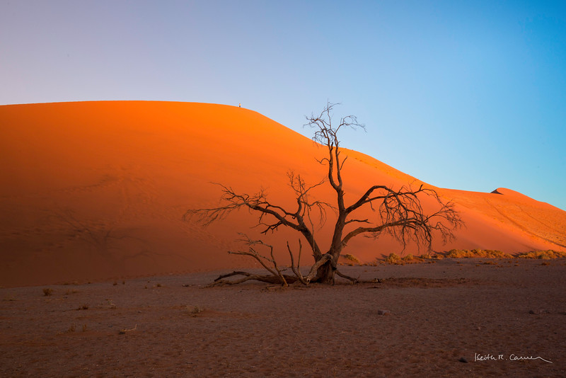 A lone visitor tops Dune 45 at Sossusvlei