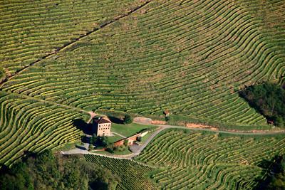 L'un des vignobles d'Irouleguy, aux alentours de St Jean Pied de Port