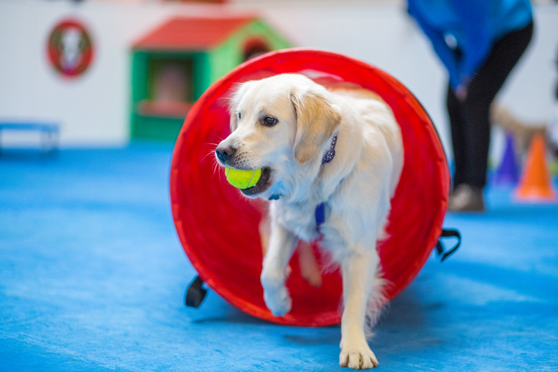 Lakeside Dog Day Care Open Day