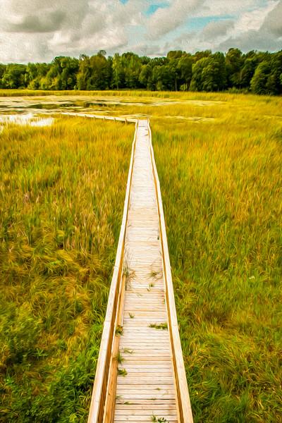 Walking Nature Bridge