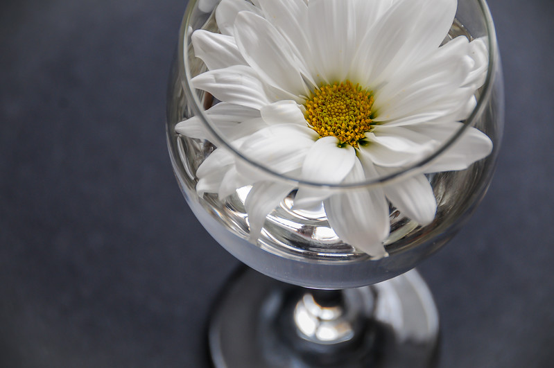 20130218_Daisy in Wine Glass