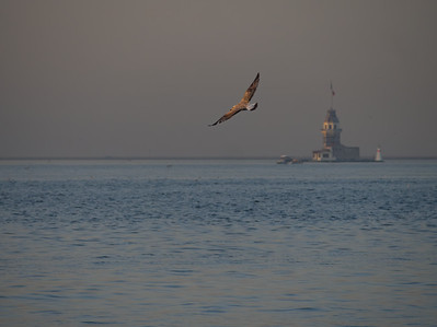 Seagull flying near Maiden's Tower in Istanbul at early morning, Turkey