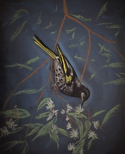 Regent Honey Eater by Giles Watson